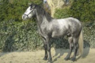 MCI jeune chevaux, Loisir, «belgique»