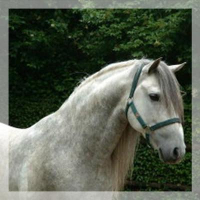 Loisir «Belgique»