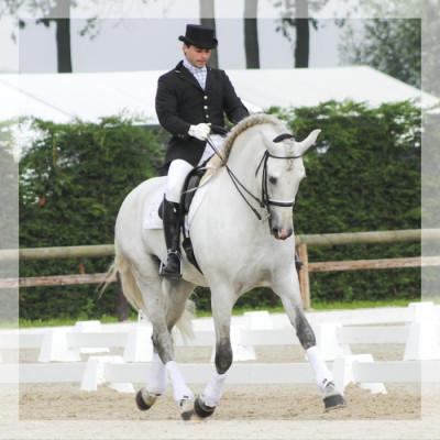 Cheval St-George «Belgique»
