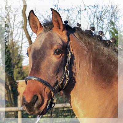 MCI jeune chevaux «Luxembourg»
