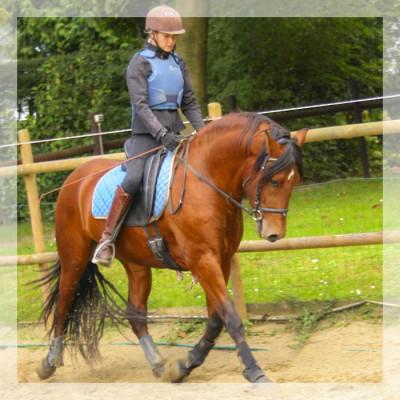 Cheval de loisir «Belgique»
