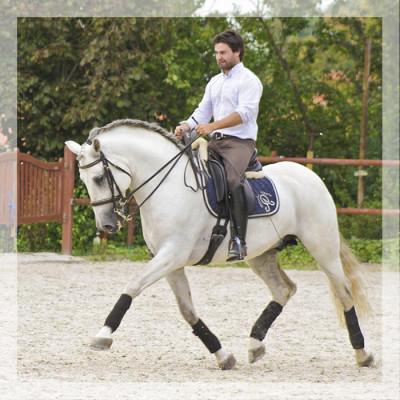 Vainqueur Jeune chevaux, Niveau M10 «Belgique»