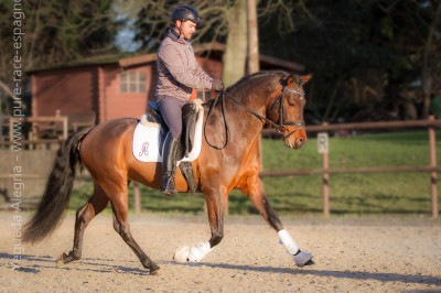 Jeune cheval concours DR Pays Bas