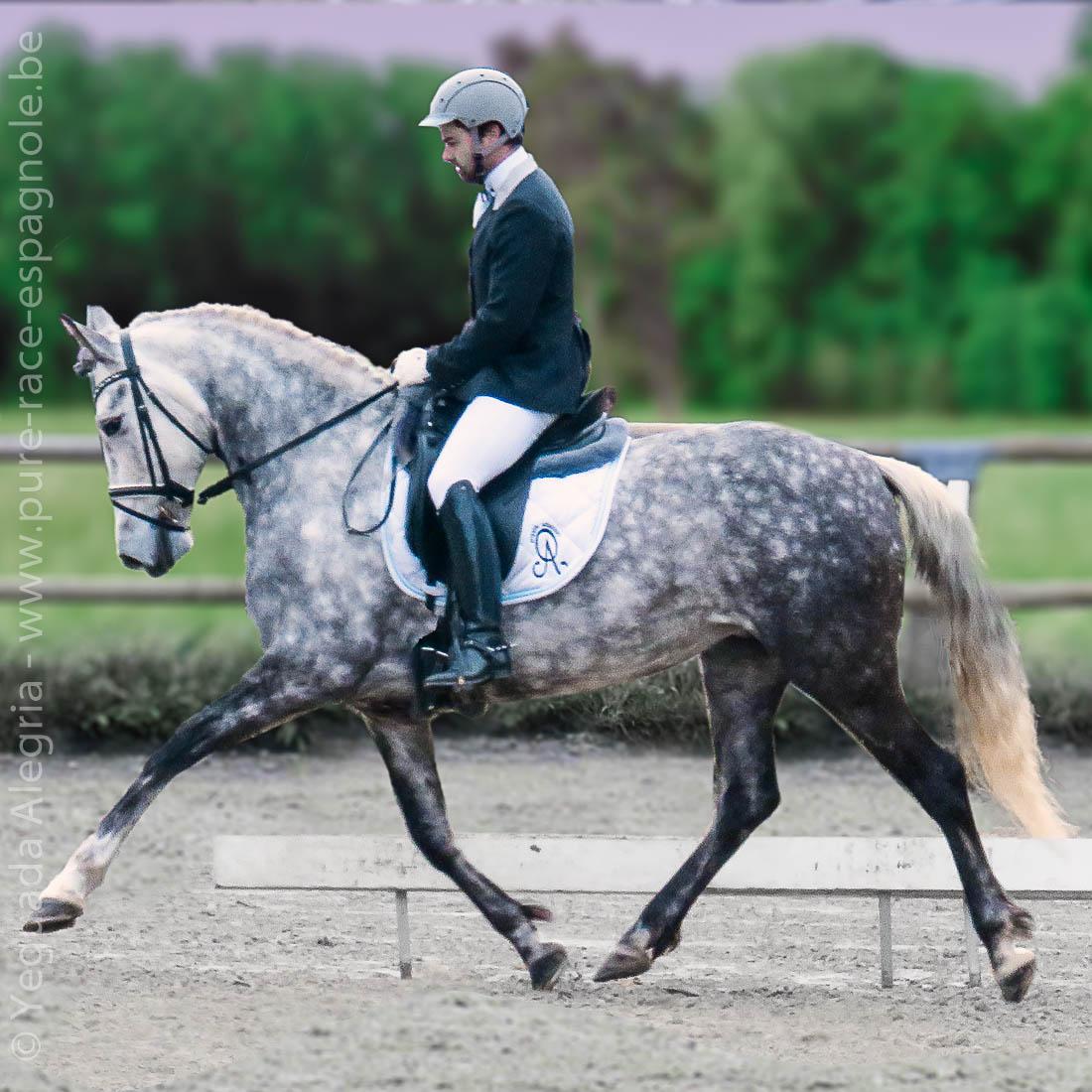 cheval espagnol sport