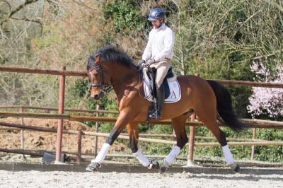 Hongre cavalier junior au Luxembourg