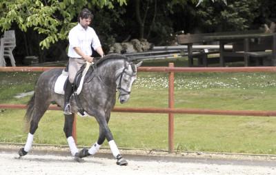 Cheval de concours et loisir Belgique