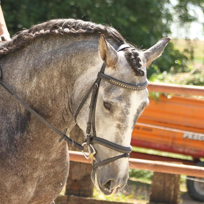 cheval espagnol plein papier